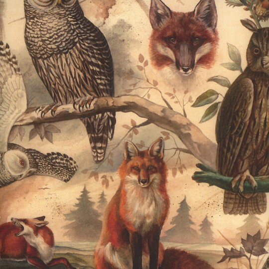 Fox and Owl Animal Print Paper ~ Bomo Hungary