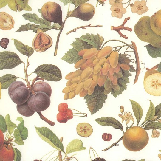 Mixed Fruit Botanical Print Paper ~ Kartos Italy