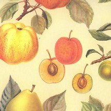 Apples and Summer Fruits Italian Paper ~ Leonardo Communication