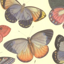 Mixed Butterfly Print Italian Paper ~ Leonardo Communication