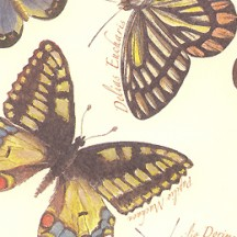 Botanical Butterfly Print Italian Paper ~ Leonardo Communication