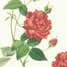 Red Rose Floral Print Italian Paper ~ Leonardo Communication