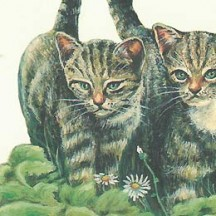 Mixed Cats Print Italian Paper ~ Leonardo Communication