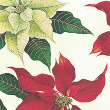 Poinsettia Print Christmas Paper ~ Rossi Italy