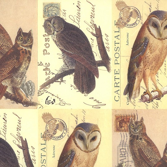 Mixed Owl Postcard Print Paper ~ Rossi Italy