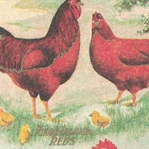 Easter Chicks and Hens Italian Print Paper ~ Rossi Italy