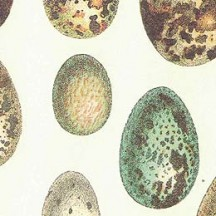 Speckled Eggs Italian Print Paper ~ Rossi Italy
