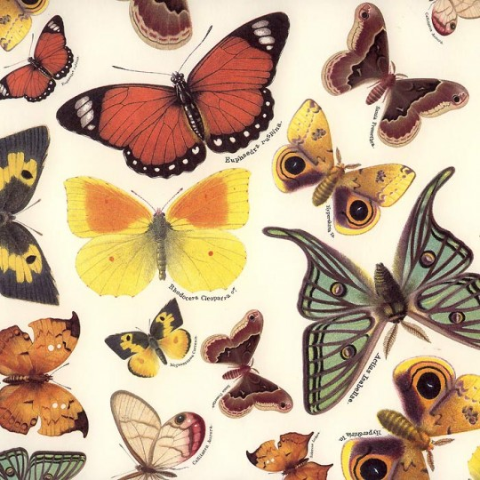 Beautiful Butterflies Italian Paper ~ Tassotti