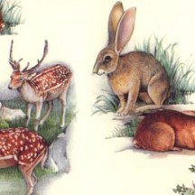 Deer and Bunnies Italian Paper ~ Tassotti