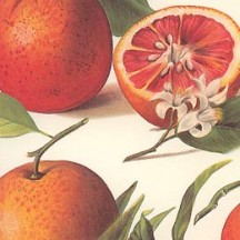 Oranges and Blossoms Italian Paper ~ Tassotti