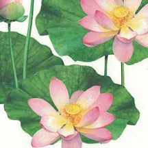 Lotus and Lily Pad Floral Print Italian Paper ~ Tassotti