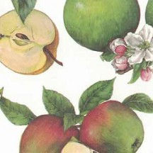 Apple and Blossom Print Italian Paper ~ Tassotti