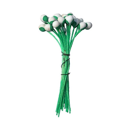 Green and Off White Bud Flower Stamen ~ Germany