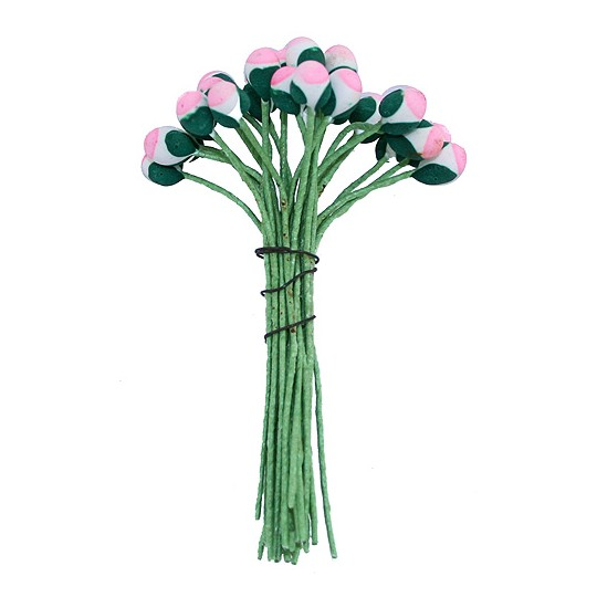 Green and Pink with White Bud Flower Stamen ~ Germany