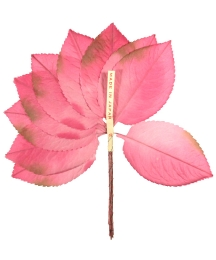 Bundle of Light Pink Silk Ombre Leaves with Brown Accents ~ Vintage Japan